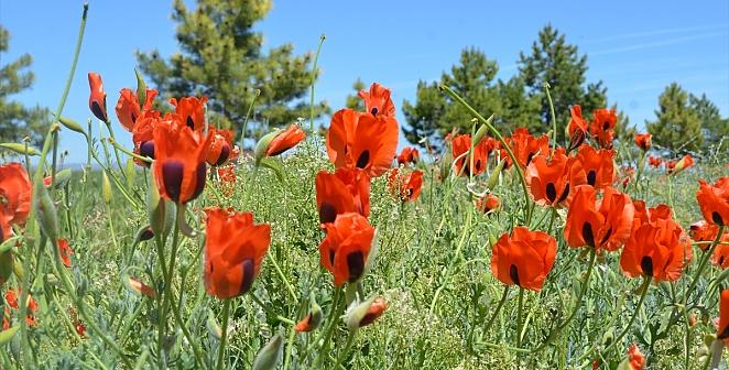 Kayseri'de baharın gelmesiyle doğa canlandı