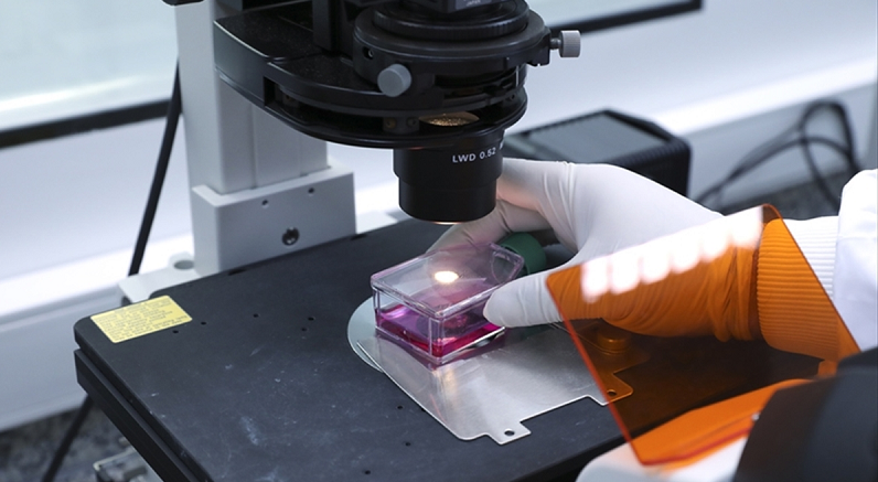 ABD'li uzmanlar karaciğerde onarımı ve yenilenmeyi sağlayan hücreleri ve yerlerini tespit etti