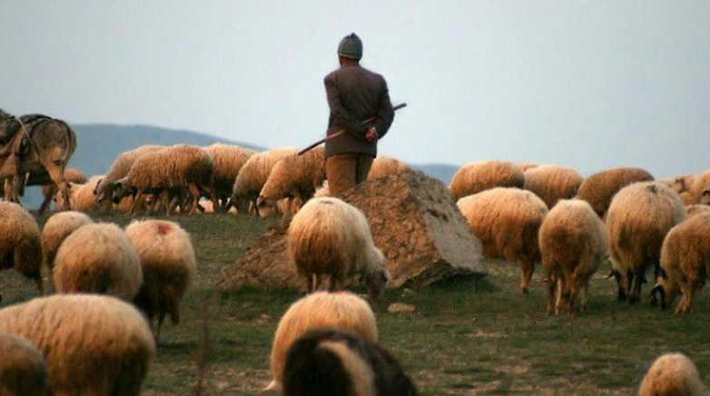 Afgan Çobanlar Arasında Silahlı Kavgada 1 kişi öldü