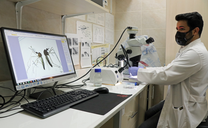 Asya kaplan sivrisineği ve diğer riskli türlerin Karadeniz'deki varlığı tespit edilecek