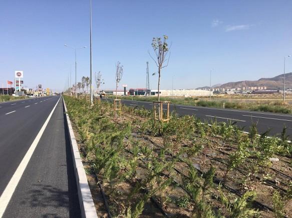Büyükşehir şehrin batı girişine 62 bin fidan dikti