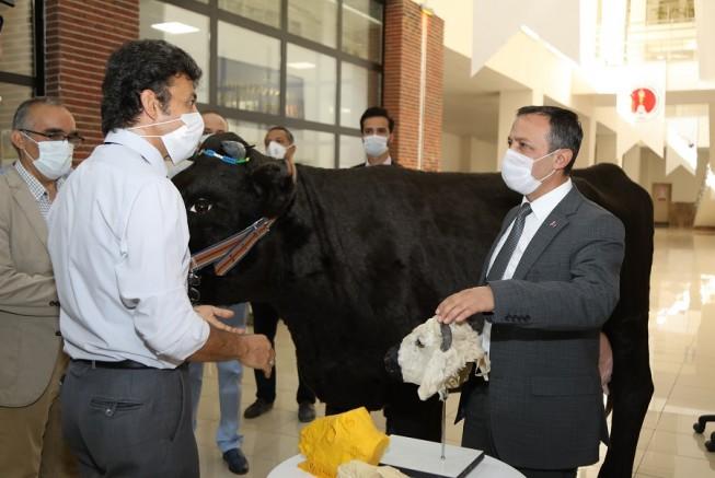 ERÜ Rektörü Çalış, Veteriner Fakültesi Öğrencileri İçin Akademisyenler Tarafından Tasarlanan Hayvan Simülatörlerini İnceledi