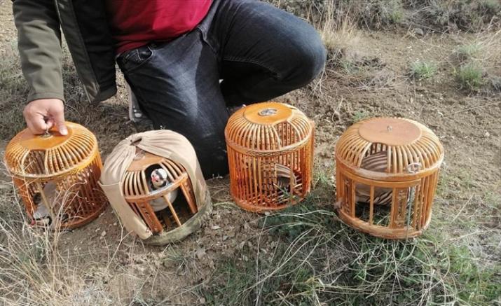 Kaçak keklik avlayan kişiye 7 bin lira ceza