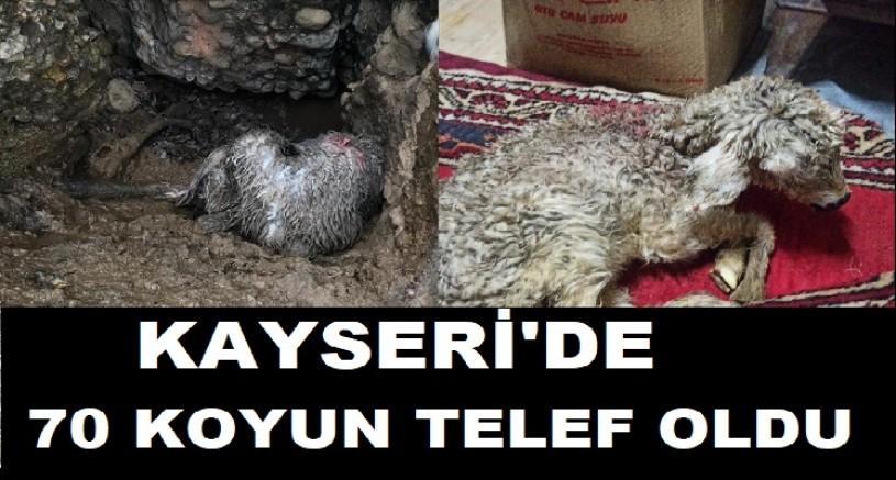 Kayseri'de tipiye yakalanan 70 koyun telef oldu
