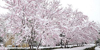 Kayseri 'de kar yağışı etkili oluyor