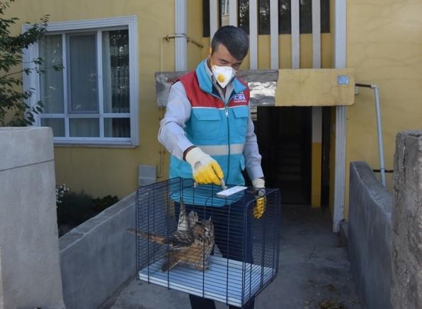 Yaralı baykuş koruma altına alındı