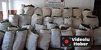 Lice kırsalında 1 milyon 119 bin kök kenevir ve 756 kilogram esrar ele geçirildi